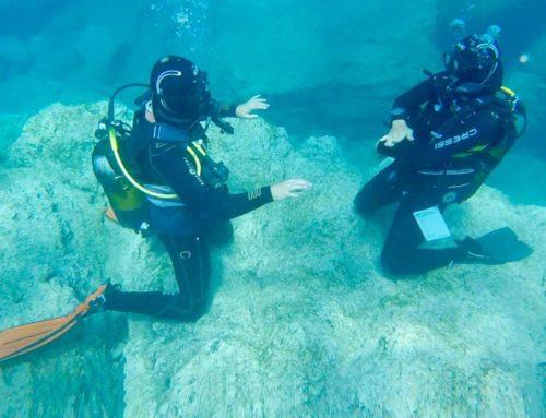 Stress and Rescue Diver (Plongeur de sauvetage et de stress)