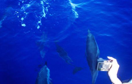 Sfakia Gavdos island_Notos_Mare_Crete_dolphins_Sfakia_boat trips